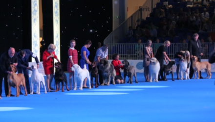 World dog show1